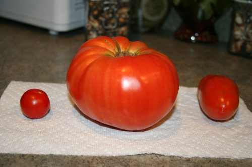 Our first three ripe tomatoes, one of each!  My biggest Beefmaster at 1.25lbs!